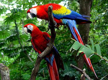 parrots macaws lapas